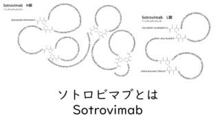 ソトロビマブ構造